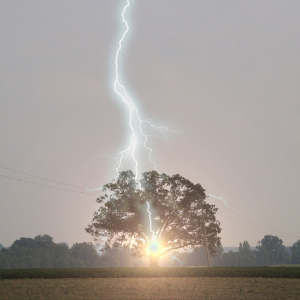 Lightning Strikes Oak Tree